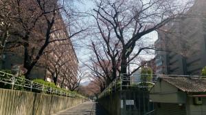 3-27桜の木-1a
