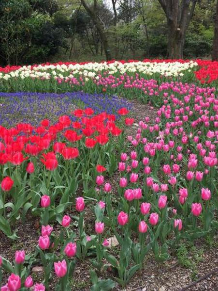 10-12植物園-11jpg