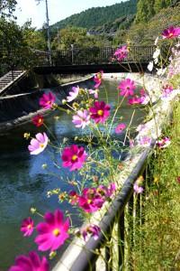 10-11疎水公園-3